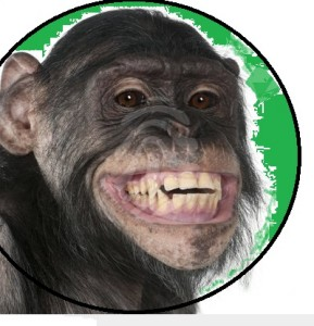szympans01