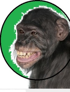 szympans22